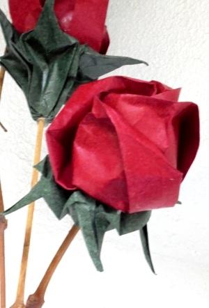 rosa central