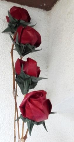 fila de roses